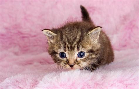 imagenes tiernas gatitos bebes imagenes de gatitos bebes tiernos animales tirnos
