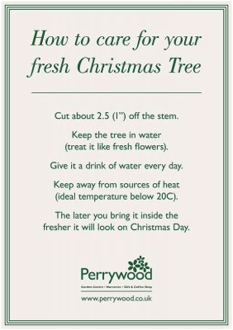 care advice for your cut christmas tree perrywood
