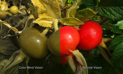 do blind in color what is color blindness green color blindness