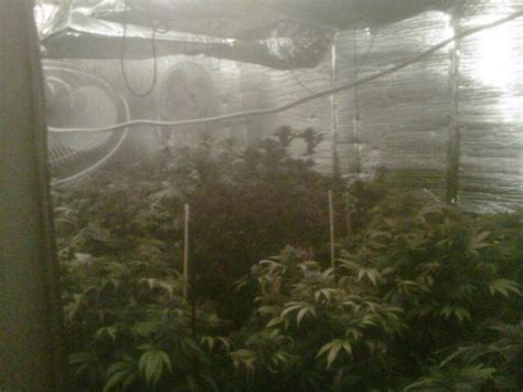 Custom Grow 420 Criminal Record 50 Marijuana Plants Seized From Indoor Grow In Southeast Las Vegas