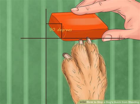 nail bleeding won t stop 4 easy ways to stop a s from bleeding wikihow