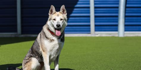 dogs home pet advice battersea dogs cats home