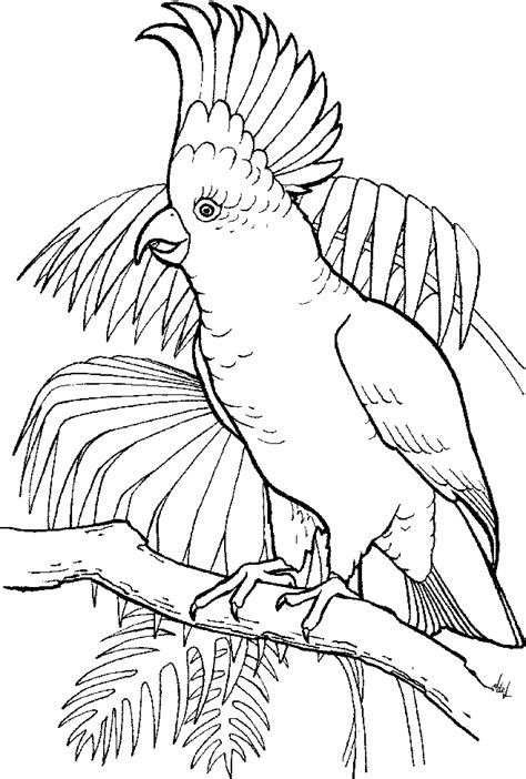 tropical bird coloring page free coloring pages of warrior cats ausmalbild