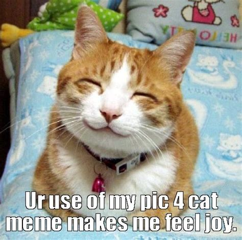 Make Your Own Cat Meme - hawaii state public library systemupcoming events make