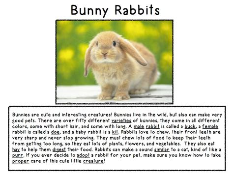 7 Facts On Bunny Rabbits by March 2013 Bird Kindergarten