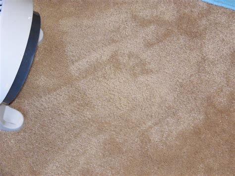 one way to get paint out of the carpet the happy home management