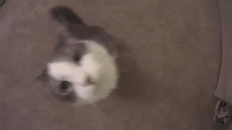 camera kiss gif find & share on giphy