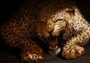 What Is Jaguar Catamancer Jaguar By Tamberella On Deviantart