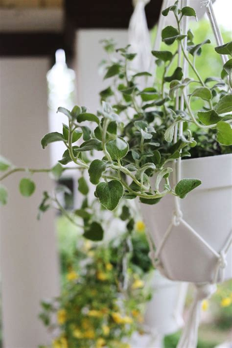 how to make hanging planters hanging planters are easy to make a beautiful mess