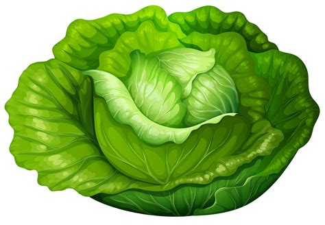 images clip cabbage clipart clipground