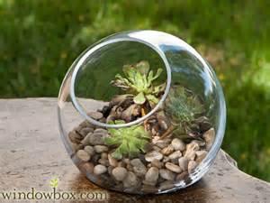 Planter Window Boxes - medium terrarium bubble bowl terrariums container