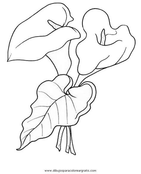 imagenes para dibujar naturaleza dibujo alcatraz 10 en la categoria naturaleza diseos