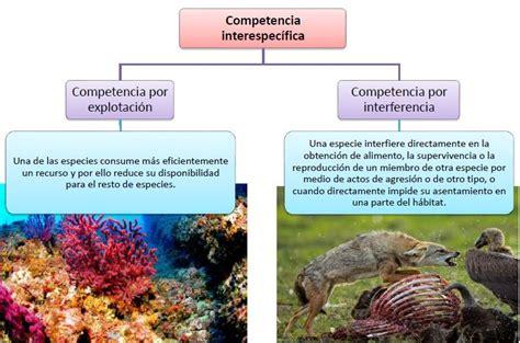 imagenes sensoriales con sus ejemplos relaciones interespec 237 ficas qu 233 es tipos y ejemplos ovacen