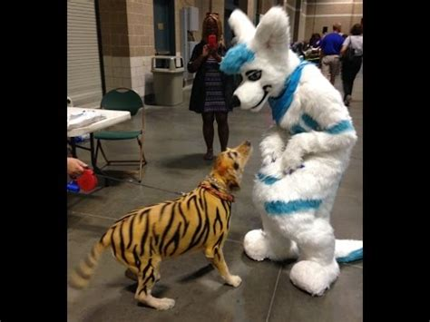 fursuit outing  stlouis pet expo youtube