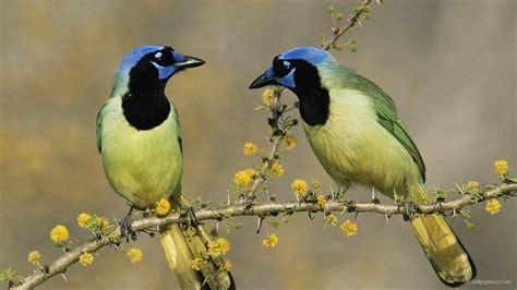 Biojanna 6 By A D Bird birds hd wallpaper free image and