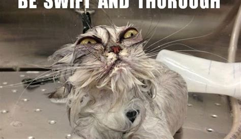 Angry Cat Meme - the gallery for gt good morning angry cat