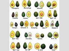 Dietary Fat Bred Out of Haas Avocados – Now It's the Reed ... C. Difficile Diet