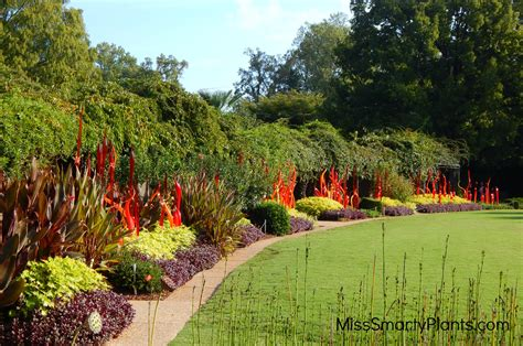 Atl Botanical Garden Chihuly At Atlanta Botanical Garden Miss Smarty Plants