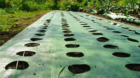 barrier for vegetable garden the power of mulch garden mats