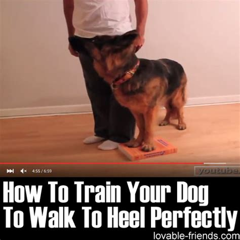 how to your to heel perfectly how to your to heel perfectly lovable friends