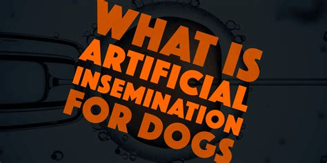 artificial insemination for dogs what is artificial insemination for dogs why using it