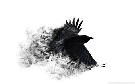 minimalistic crows white background wallpaper 1920x1200