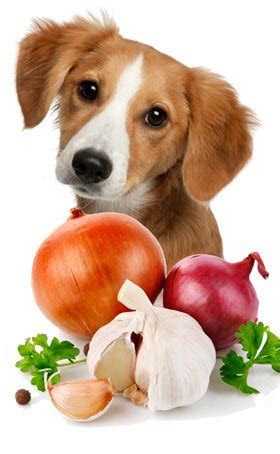 is garlic toxic to dogs 5 food your should avoid meet a lover