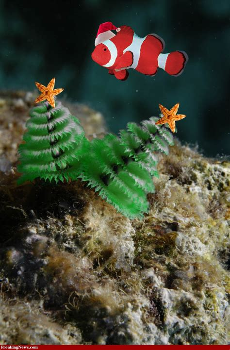christmas tree worms 35107 fish navy films