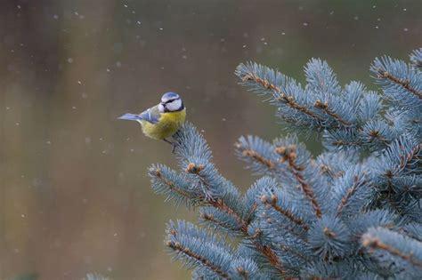 suite s 233 rie oiseaux de nos jardins en hiver le