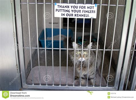 in a cage cat in a cage at the animal shelter stock image image of humane shelter 572179