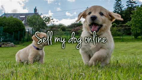 sell my puppy sell my