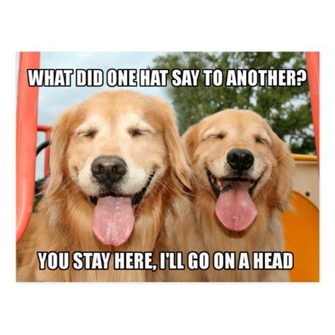 golden retriever meme golden retriever hat joke meme postcard zazzle co uk