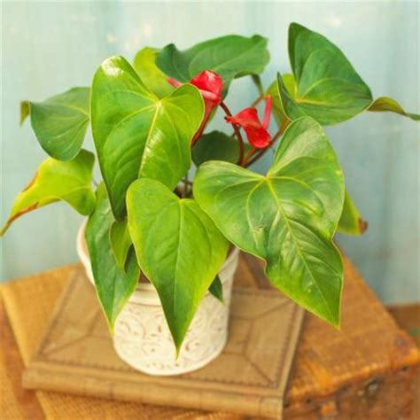 easy houseplants house plants 25 easy houseplants easy to care for indoor