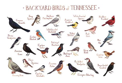 tennessee backyard birds field guide art print watercolor