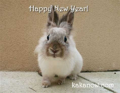 white rabbit new year happy new year fuzzy today