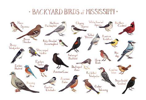 mississippi backyard birds field guide art print watercolor
