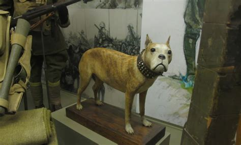 Sergeant Stubby Museum Sgt Stubby Canine Combat J Powell