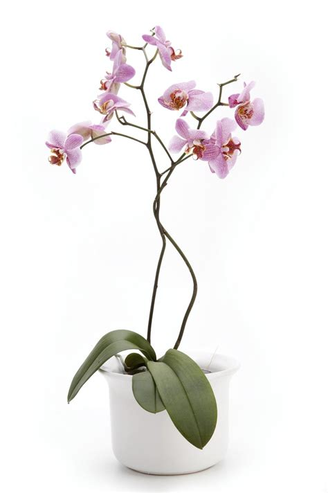 caring for orchids indoors after bloom garden and plant