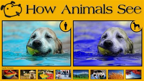how do dogs see color 10 exles of how animals see images that show us the