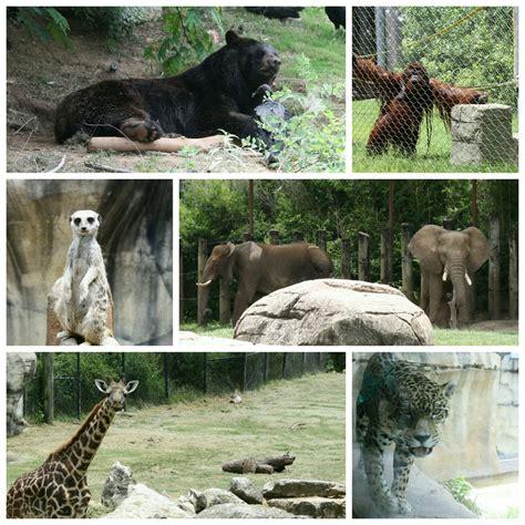 drive zoo texas cameron park zoo zoos waco tx reviews photos yelp