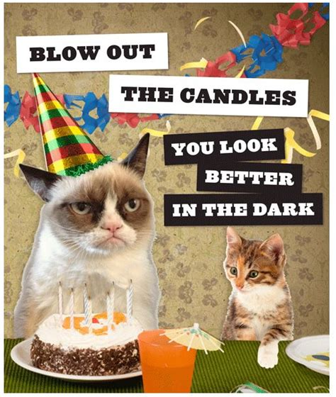 grumpy cat party ideas one charming party birthday best 25 grumpy cat birthday ideas on pinterest grumpy