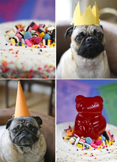 happy birthday pug cake 17 best ideas about happy birthday pug on pugs pug and pug puppies