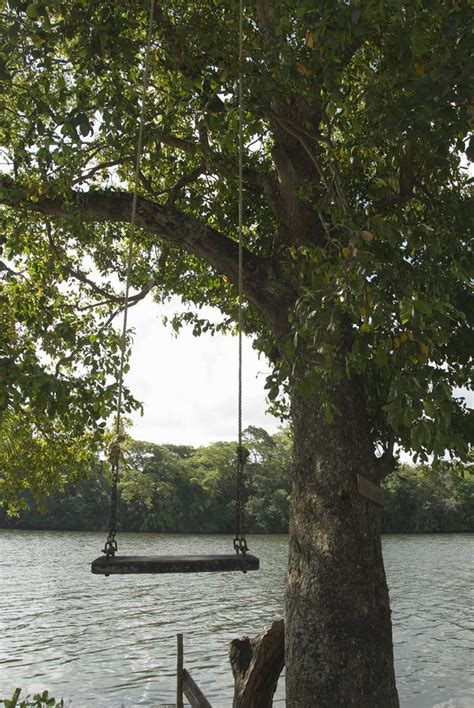 rope swing over water empty tree rope swing over water photograph by james forte
