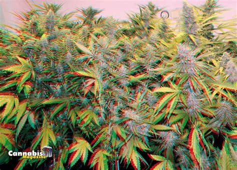 imagenes de imagenes en 3 d entrar en 3d marihuana uncategorised