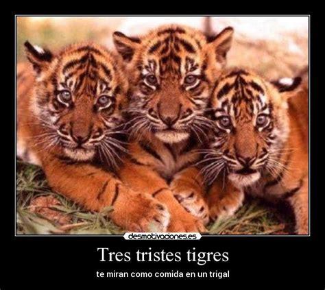 tres tristes tigres 8432217808 tres tristes tigres desmotivaciones