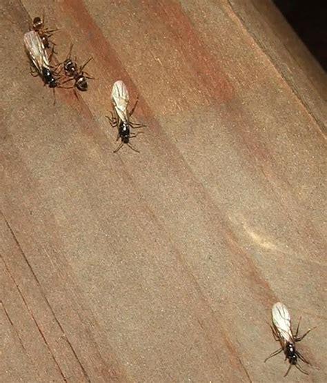 moisture ants assistant home inspectors
