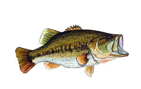 bass fishing boat stickers large mouth bass fish sticker decal helmet equipment