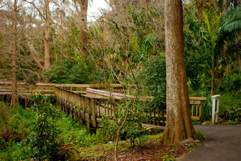 harry p leu gardens florida hikes