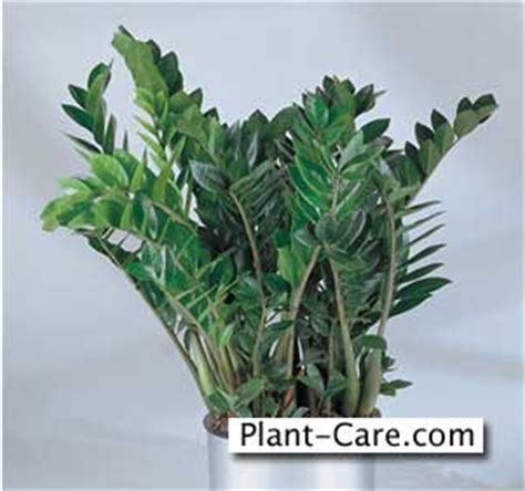 easy to take care of indoor plants indoor houseplants easy way to add life to a home