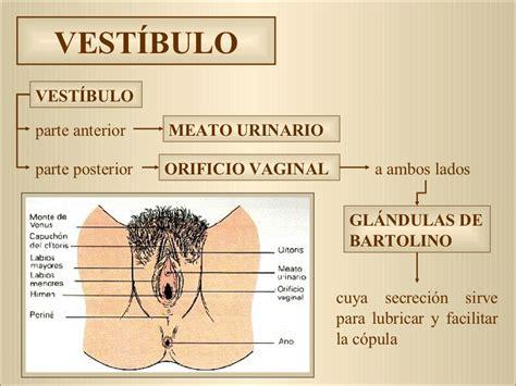 vestibulo feminino anatom 237 a y fisiolog 237 a del aparato reproductor femenino